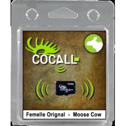 Female moose card