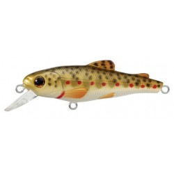 Live Target Brook Trout Fry...